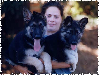 Triann puppies